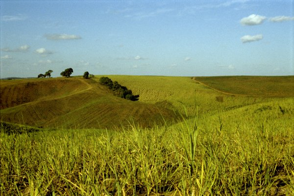 Campi di canna da zucchero appena raccolta nella zona rurale di Recife, Pernambuco, nord est del Brasile © giorgio cossu.jpg
