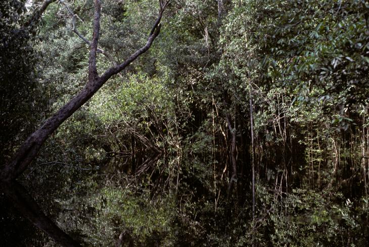 rio-negro-amazonas